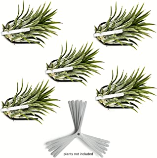 Air Plant Holder for Vertical Garden 5 Pack Wall Planter for House Plants, Hanging Plant and Tillandsia Air Plants Living Wall Terrarium. Great Wall Decorations for Living Room | No plants included S5