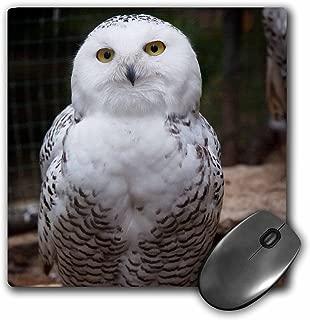 3dRose LLC 8 x 8 x 0.25 Inches Mouse Pad, Pretty White Snowy Owl Birds Animals (mp_79143_1)