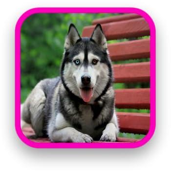 Husky Dog HD Wallpapers