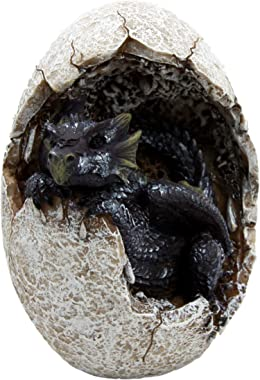 """Ebros Gift Fossil Raeon Sunlight Dragon Hatchling Breaking Out of Egg Shell Decorative Figurine 5"""" H Dungeons and Dragons"""