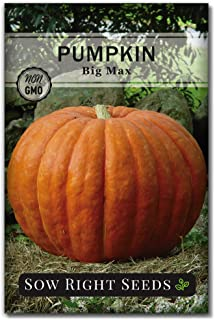 Sow Right Seeds - Big Max Pumpkin Seed for Planting - Non-GMO Heirloom Packet with Instructions to Plant a Home Vegetable ...