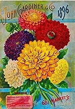 1896 JOHN GARDINER DAHLIAS VINTAGE FLOWERS SEED PACKET TRAVEL ADVERTISEMENT ART POSTER