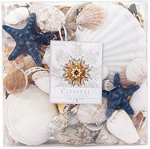 ANDALUCA Natural Seashells Vase Filler Beach Home Décor