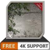 無料の雨のジャングル-あなたのHDR 8k 4kテレビのクリスマスのための平和フル雨テーマ