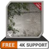 jungle humide pluvieuse gratuite HD - thème de la pluie pleine de paix pour Noël sur votre téléviseur HDR 8k 4k et vos dispositifs d'incendie comme fond d'écran et thème pour la médiation et la paix