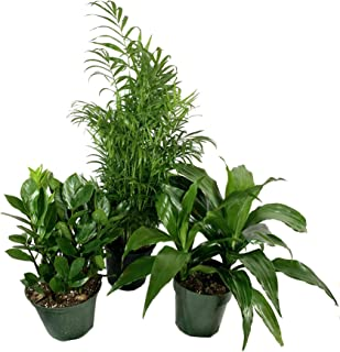Care For Zz Plant