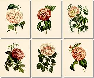 Flower Wall Art - Botanical Prints (Set of 6) - 8x10 - Unframed - Vintage Floral Decor