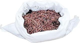 SUPERWURM 500 g Kompostwürmer – Dendrobena – ca. 550 lebende Würmer für..