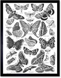 Wee Blue Coo Scientific Illustration Butterfly Moth Black White Drawing Art Print Framed Poster Wall Decor 12x16 inch