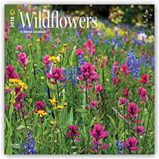 Wildflowers 2018 12 x 12 Inch Monthly Square Wall Calendar, Flower Floral Plant Outdoor Nature