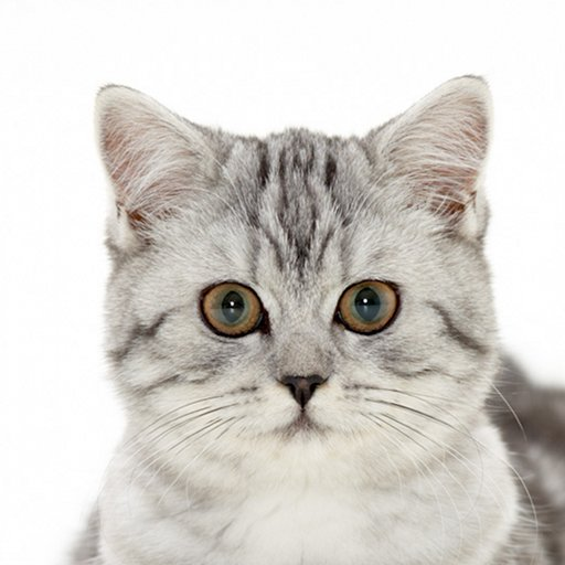 The Most Amazing Facts about Cats