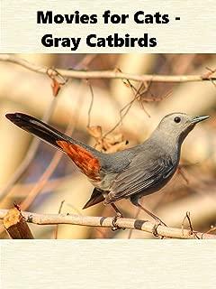 Movies for Cats - Gray Catbirds