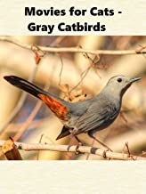 Movies for Cats - Gray Catbirds