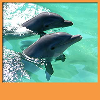 Dolphins Live Wallpapers