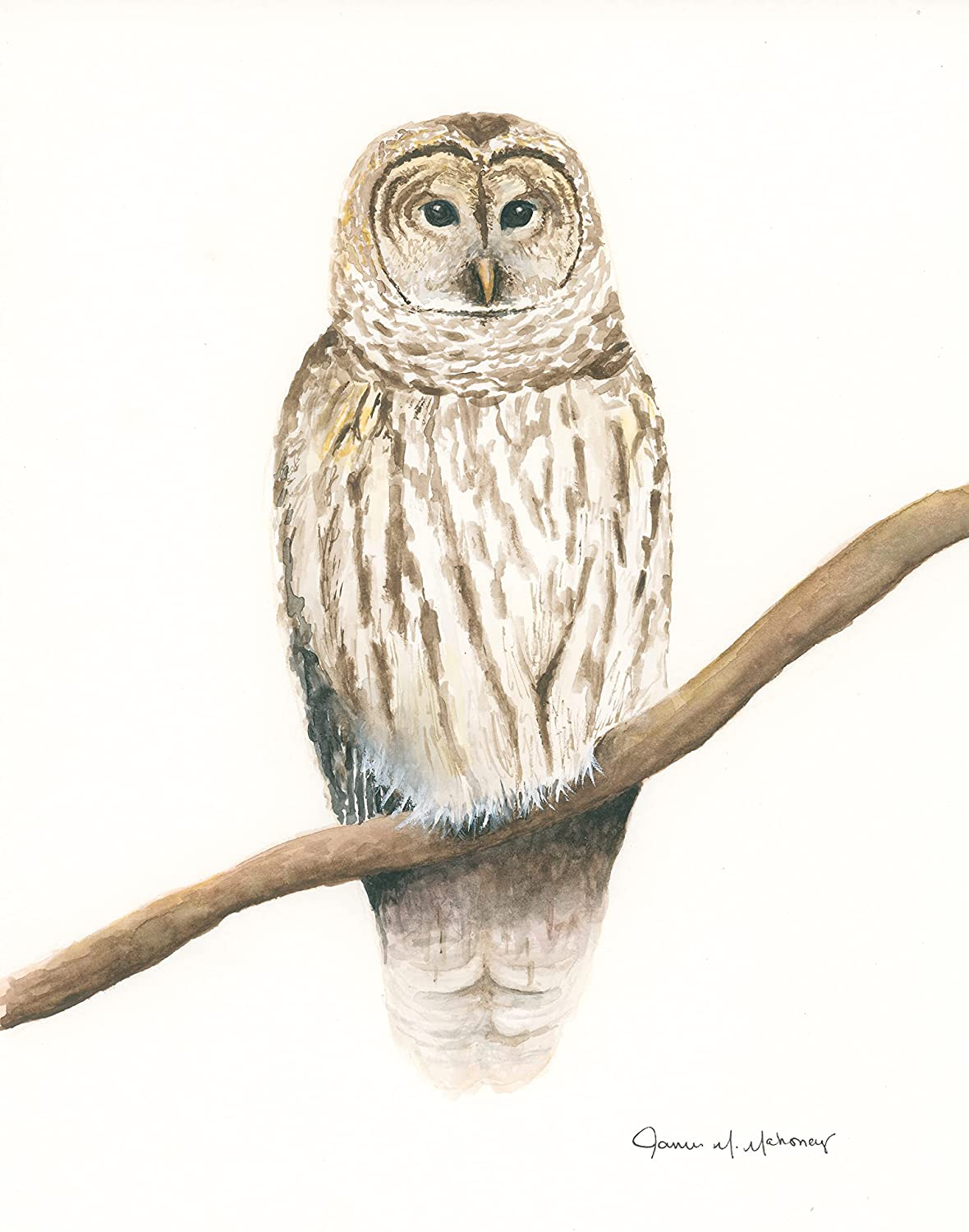 Barred Owl Super beauty Ranking TOP3 product restock quality top 8