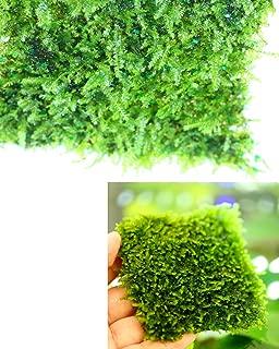 Best 100 plants taiwan Reviews