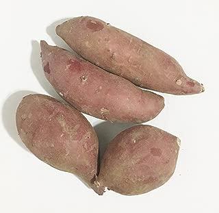 Best korean purple sweet potato Reviews