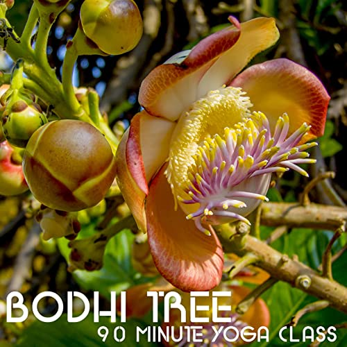 Bodhi Tree 90 Minute Yoga Class: Music for Yoga, Meditation ...