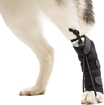 Rear No-Knuckling Training Sock | Helps Dogs Pick up Their Feet When Knuckling Under or Dragging Their Rear Paws