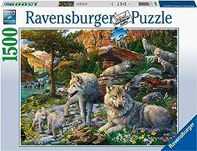 Ravensburger- Puzzle 1500 pièces-Loups au Printemps Adulte, 4005556165988