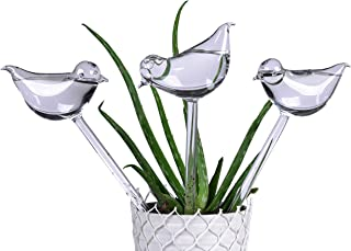 Best glass water feeders for plants Reviews