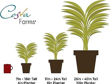Costa Farms Live Hoya Heart Succulent-Like Plant, White Ceramic, Love, 5-Inches Tall