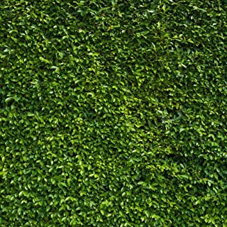Best green lawn background Reviews
