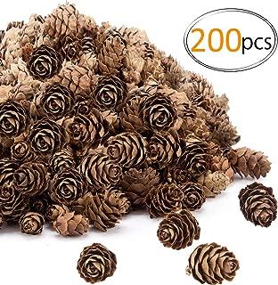 Best craft supplies pine cones Reviews