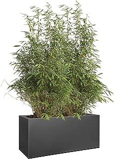 Amazon.es: 50 - 100 EUR - Cajas / Recipientes para plantas y ...