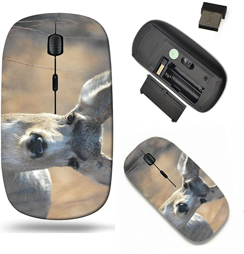 Liili Wireless Mouse Travel 2.4G Wireless Mice with USB Receiver, Click with 1000 DPI for notebook, pc, laptop, computer, mac book A mule deer buck making direct eye contact with the camera lens Photo
