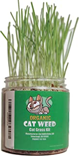 Best cat weed plant Reviews