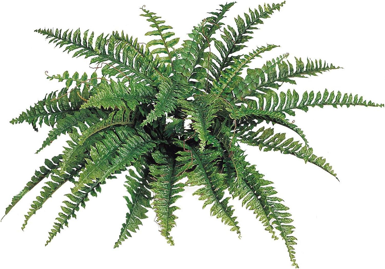 "Larksilk Boston Fern Artificial Plants Fake Silk Indoor House Plant 34"" Inch Diameter Set of (2) 42 Fronds Each"