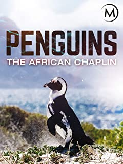 Penguins: The African Chaplin