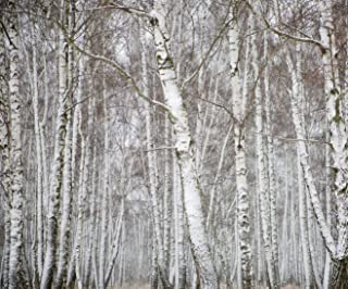 10x8ft White Birch Forest Winter Backdrop Snowflake Photo Shoot Background Winter Forest White Christmas Trees Photography Studio Props Adult Artistic Portrait Natural Scenic Digital Video Wallpaper
