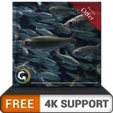 Acuario redondo gratis HD: decora tu habitación con un hermoso acuario de peces en tu televisor HDR 4K, televisor 8K y dispositivos de fuego como fondo de pantalla, decoración para las vacaciones de N
