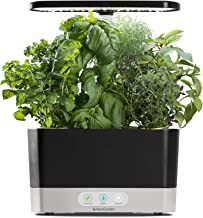 kitchen herb garden