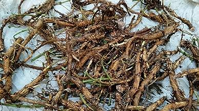 HIGH Germination Seeds:Cascade : Hop Rhizomes-8 Varieties: Nugget, Mt. Hood, Chinook, Newport, Crystal, Tett