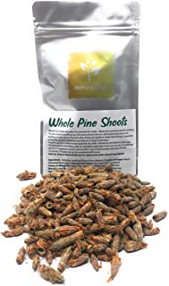 Whole Pine Shoots - Pine Shoots Are Perfect For Gourmet Ice Cream, Deluxe Spa Moments And For Smoking - Organic, Kosher, H...