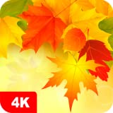 Autumn Wallpapers 4K & HD Backgrounds apps...