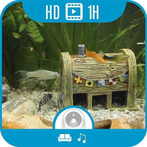 Home Aquarium [1+ Stunde Video & Audio]