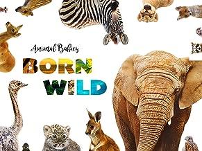 Animal Babies: Born Wild