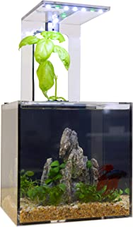 EcoQube C Aquarium - Betta Fish Tank with UV LED Sterilizer and Aquaponic System for Desks, Offices, and Home Décor