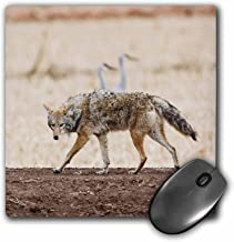 3dRose LLC 8 x 8 x 0.25 Inches Mouse Pad, Coyote Wildlife, Larry Ditto (mp_92854_1)