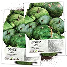 Seed Needs, Apple Gourd (Lagenaria siceraria) Twin Pack of 45 Seeds Each Non-GMO