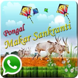 Best free pongal greetings Reviews