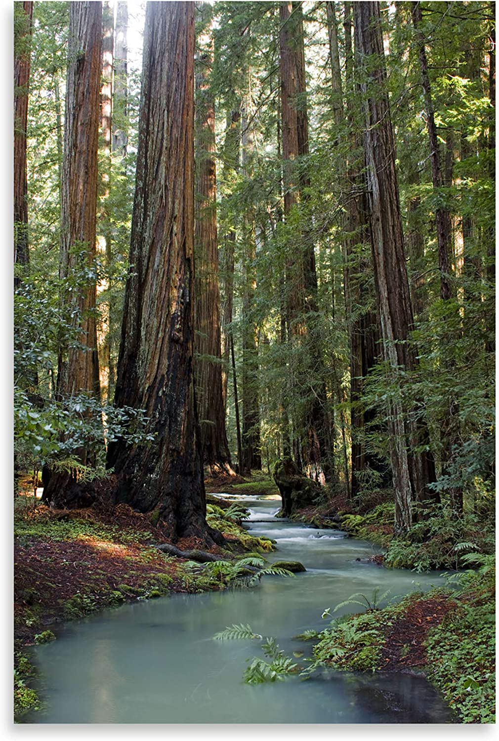 Free shipping anywhere in the nation Gango Home Décor Redwood Forest by: Art Max 73% OFF Fine Photograph III