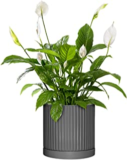 Sponsored Ad - Modern Ceramic Pots for Plants-This 6 Inch Plant Pot is Great as a Flower Pot, Orchid Pot, Succulent Plante...