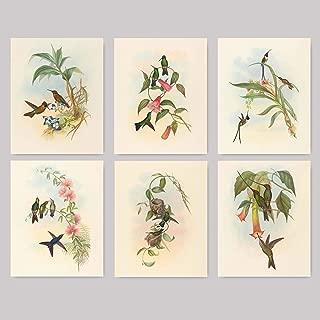 Hummingbird Prints (Botanical Bird Print, Tropical Wall Art) Set of 6 - Unframed