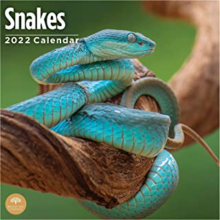 2022 Snakes Wall Calendar by Bright Day, 12 x 12 Inch, Reptiles