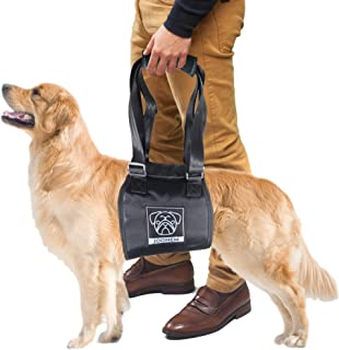 Best equipment for disabled dogs Reviews